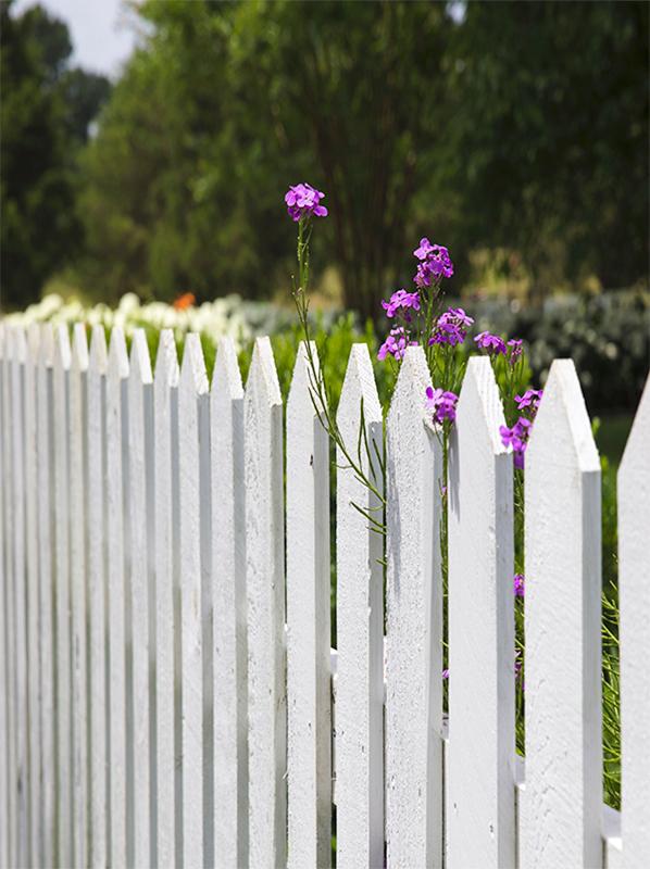 Castle Complements Painting Wooden Fence Repainting Wait